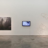Mirando la flor, group show, Sicardi Gallery, Houston. Image via: sicardi.com