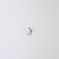 Sin título, de la serie Medio, 2016. Escultura. Hoja de papel algodón 400 gms y hoja orgánica. 70 x 50 cm. Cortesía: Sol Pochat. Crédito de la foto: Carolina Zancolli