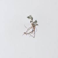Sin título, de la serie Medio. Detalle, 2016. Escultura. Hoja de papel algodón 400 gms y hoja orgánica. 70 x 50 cm. Cortesía: Sol Pochat. Crédito de la foto: Carolina Zancolli
