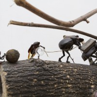 De un lado al otro (detalle), 2016. Tronco con inclusión de insectos. Cortesía de Big Sur, Buenos Aires.