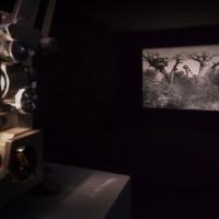 Vista de exhibición, 2016. Cortesía de Museo Tamayo, Ciudad de México.