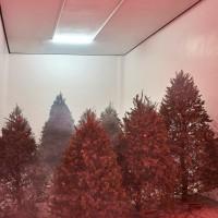 Willy Kautz, Ver la madera por el árbol, 2016. Pinos. Medidas variables. Cortesía: El cuarto de máquinas. Crédito de la foto: El cuarto de máquinas.