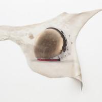 Sarah Ancelle Schönfeld, Shamanistic Travel Equipment/ Coat IX. UV print on cowhide.