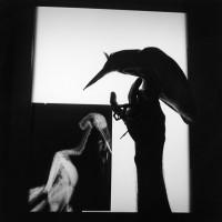 Graciela Iturbide, Radiografía de un pájaro, Oaxaca, 1999. Gelatin silver print. 40.64 x 50.8 cm.