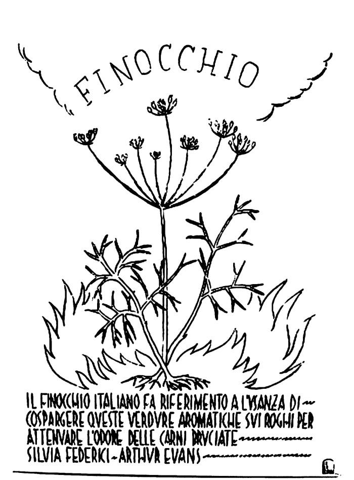 _3_finocchio_umbral