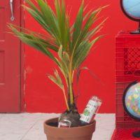 Coquito plant por Juan Sebastián Peláez. Cortesía de los artistas y Km 0.2