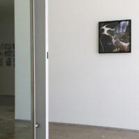 Nina Katchadourian, Sugar Fox, 2011. C-print.