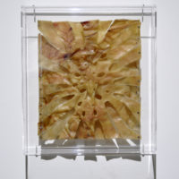 Thomas Glassford, Monstera Deliciosa - Chicharrón, 2014, Pork rind mounted on plexiglass in plexiglass frame, 11-5/8