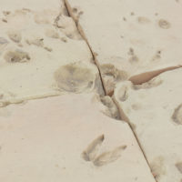 Jorge Satorre, Los animales muertos (2017-18). Vistas de instalación en el Museo Tamayo, Ciudad de México. Fotografía: © Agustín Garza. Cortesía del Museo Tamayo