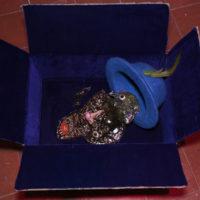 Muestra colectiva. Vista de la exposición Fiebre Bot Fantasma, Casa de la Cultura UAEM, Ciudad de México, 2018. Registro fotográfico: Johann Lara. Cortesía de Constitución
