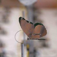 Tocihua papalotzin. Estructura de madera, aluminio, semillas de maíz, cables, circuitos electrónicos y sensores. Dimensiones variables.Imagen cortesía del artista y Museo de Arte Contemporáneo de Oaxaca