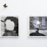 Martina Álvarez, retrato doble de una rosa, fotografía y acrílico. Fotografía por Benjamín Matte. Cortesía del Museo del Polvo y LOCAL Arte Contemporáneo