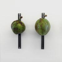 Digital Palm. Cocos, Metal. Fotografía: Bruno Viruete. Cortesía de Ladera Oeste