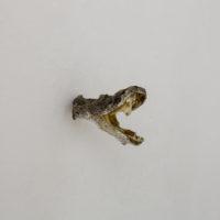 Juan Caloca. Crónica de las destrucciones: in Nemiuhyantiliztlatollotl, 2018. Cambio de estado Vista de Exhibición en Parque Galería.