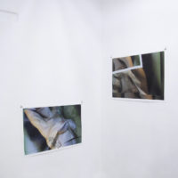 Florencia Alvarado. Corte/Crudo. Vista de exhibición en Aramauca. Imagen cortesía de Aramauca