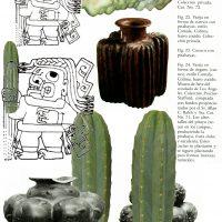 SAN PEDRO Collage Vasija de Cómala, cactus conocido como órgano en México y como San Pedro en Perú. Figura de personaje mítico de Chavin portando un San Pedro. El San Pedro es una planta alucinógena sagrada cuyo uso persiste en las costas del Norte de Perú 2019