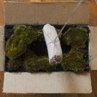 Mazmorra (2019). Objeto escultórico: Caja de cartón, piedra con cristales, cadena y agua. Imagen cortesía de Estudio Marte 221°
