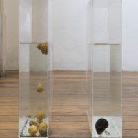 Los lombardos (La guerra contra los caracoles) (2019). Objeto escultórico: Dos cajas de acrílico con caracoles. Imagen cortesía de Estudio Marte 221°