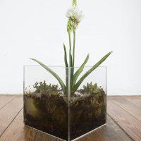 Ofelia (2019). Objeto escultórico: Cubo de acrílico, flor, agua y tierra. Imagen cortesía de Estudio Marte 221°