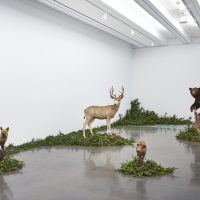 Gabriel Rico, The Discipline of the Cave (2019). Installation view. Aspen Art Museum. Photo: Tony Prikryl