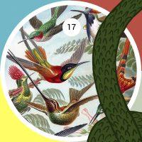 Lámina del libro Kunstformen der Natur (Formas de arte de la naturaleza) de Ernst Haeckel, publicado en 1904. La ilustración retrata parte de la variedad de especies de colibríes halladas en América, animales que por su naturaleza combativa eran antiguamente asociados a Huitzilopochtli, deidad azteca de la guerra.