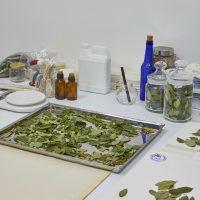 Ximena Garrido-Lecca, Lecturas Botánicas: Erythroxylum coca (2019). Vista de instalación.Foto por Juan Pablo Murrugarra. Cortesía de la artista y Proyecto AMIL