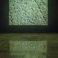 María José Argenzio, No todo lo que brilla (2019). Vista de instalación. Imagen cortesía de la artista