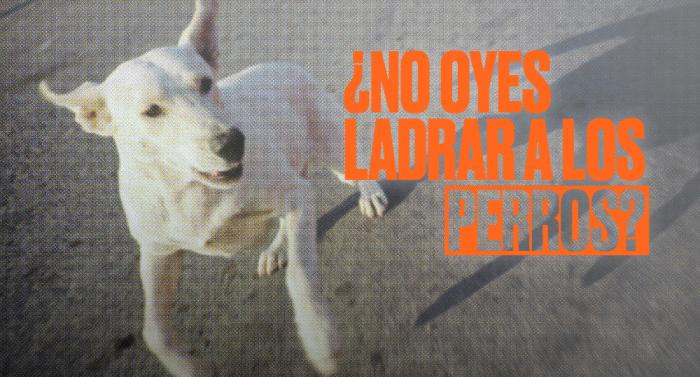 El CCEMX presenta la muestra «¿No oyes ladrar a los perros?», curada por Rigoberto Reyes Sánchez: ¡Inauguración el próximo 30 de octubre a las 19 hrs!