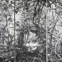 Tomás Ochoa. Línea Negra (Amazonía on fire). Pólvora y mixta sobre lienzo. 2018. Crédito:Ricardo Bohórquez / MAAC