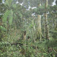Ramón Piaguaje. Paisaje Amazónico. Óleo sobre lienzo. Colección privada. Crédito:Ricardo Bohórquez / MAAC