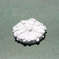 Ánima Correa, Copper Vein t(4), 2020. Concrete and earth pigments. Image courtesy ofCourt Space