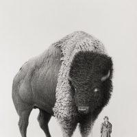 Mateo Pizzarro, bizonte. Imagen cortesía de LA PARED